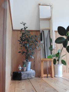 鏡と観葉植物