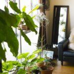 風水で考える観葉植物の効果と置き場所