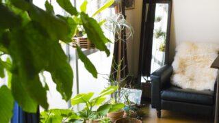 観葉植物の効果と置き場所