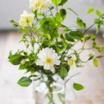 風水で就職 転職 収入を上げるために取り入れたい観葉植物や花