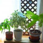 暗い玄関や室内にも置ける風水効果のある観葉植物はコレ!