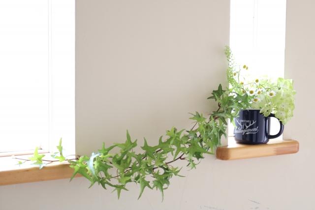 トイレの小窓の観葉植物
